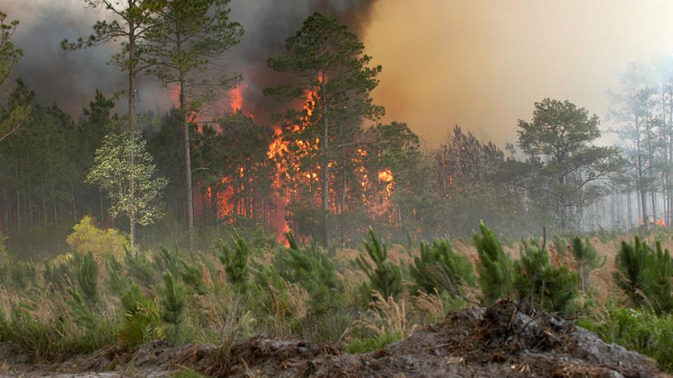 The Bugaboo forest fire in Florida. Photo Wikipedia
