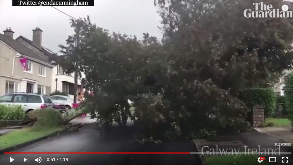A tree has fallen on the road, blocking the street. Screen shot from The Guardian´s YouTube video.