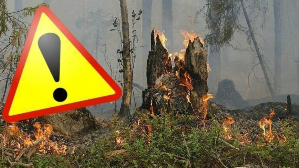 Warning for forest fires