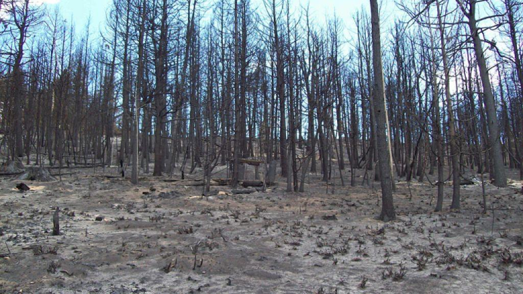 Forest fire damage Argyle Canyon 2012. Photo by Wikipedia Commons